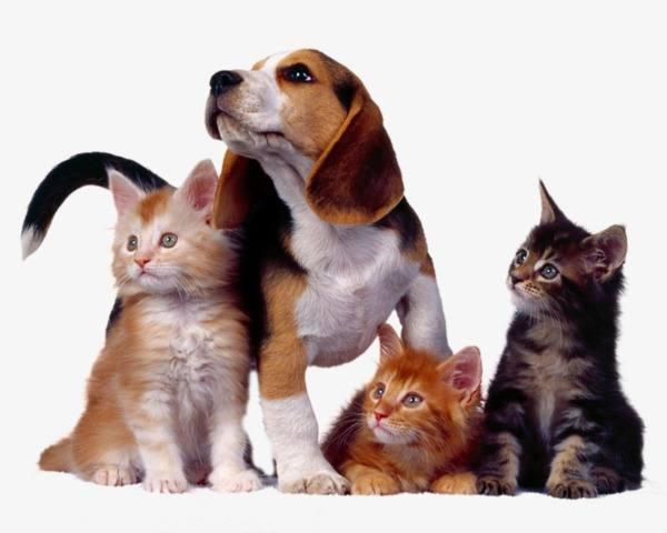 Опасна ли вакцинация для животных