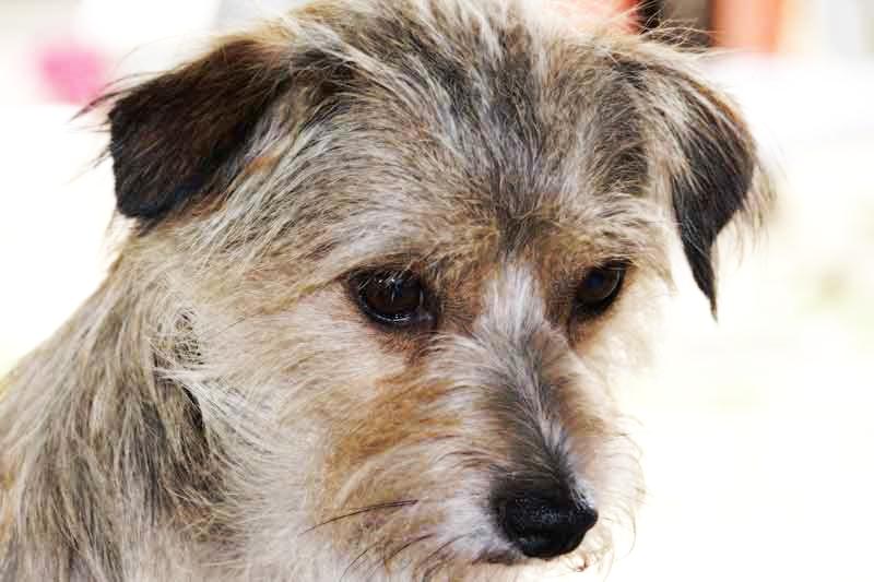 Собака, заболевшая вирусным энтеритом