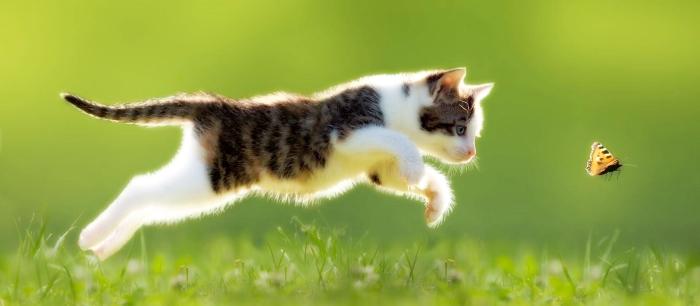Продолжительность жизни кошки