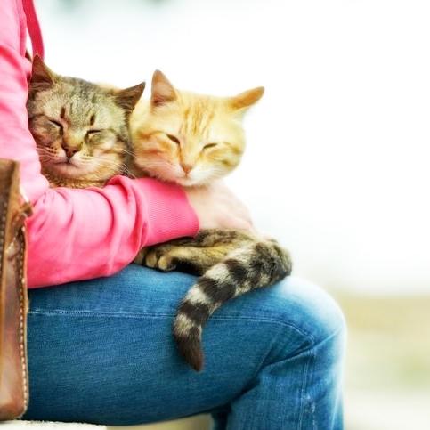 Сколько жизней у кошек