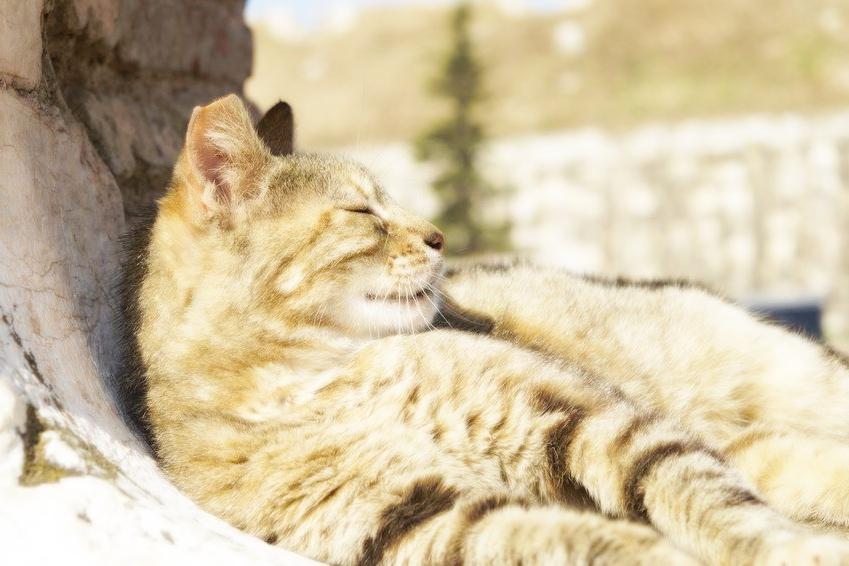 Продолжительность жизни кошки растет