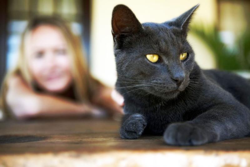 контролируйте самочувствие кошки