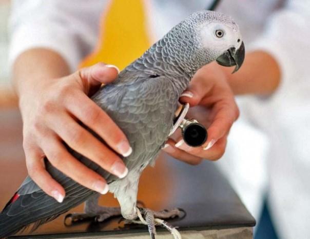 Орнитолог ветеринар в ветклинике Подольск