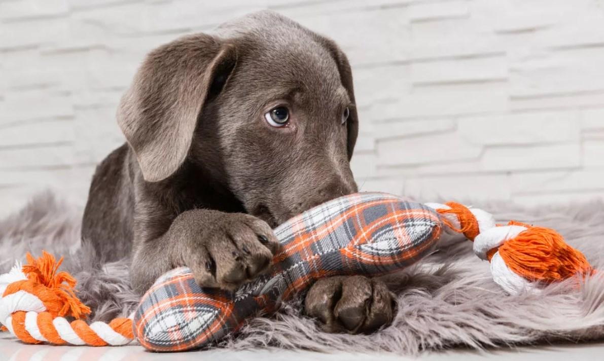 психолог излечит страхи собаки